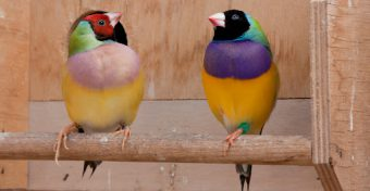 Sier- en Volierevogels